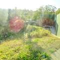 Photos: 東山動植物園:新ゴリラ・チンパンジー舎 - 59(観察窓から見た景色)
