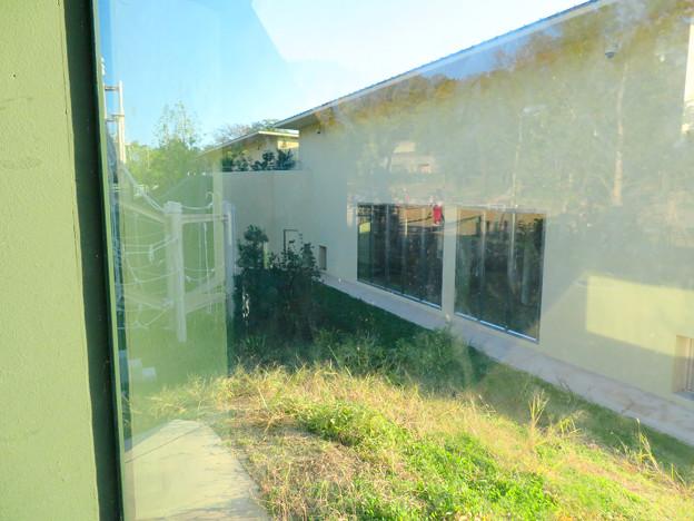 東山動植物園:新ゴリラ・チンパンジー舎 - 60(観察窓から見た景色)
