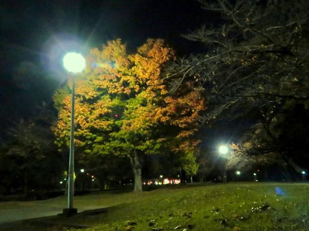 染まり始めた落合公園の木々 - 1