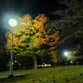 写真: 染まり始めた落合公園の木々 - 1