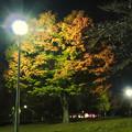 写真: 染まり始めた落合公園の木々 - 2