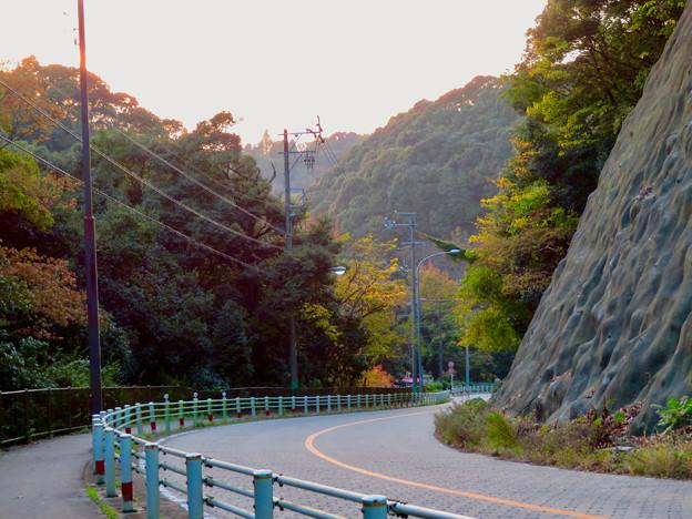 定光寺川沿いから見た山の紅葉 - 1