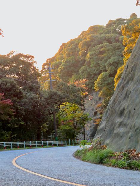 定光寺川沿いから見た山の紅葉 - 2