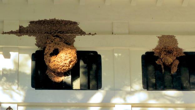 秋の定光寺 No - 11:お堂に付いてたでっかい蜂の巣