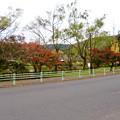 1週間経ったけどあまり紅葉は進んでなかった、定光寺公園(2018年11月18日) - 1