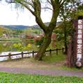 Photos: 1週間経ったけどあまり紅葉は進んでなかった、定光寺公園(2018年11月18日) - 2