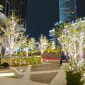 写真: すごく雰囲気が良かった、大名古屋ビルヂング5階「スカイガーデン」のクリスマス・イルミネーション - 20