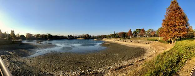 水抜き(池干し)された落合公園の池(2018年11月) - 17:パノラマ