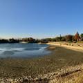 Photos: 水抜き(池干し)された落合公園の池(2018年11月) - 17:パノラマ