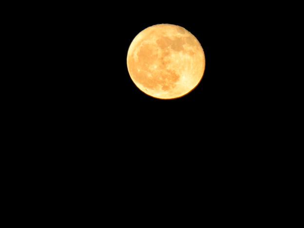 昇ったばかりで煌々と輝く十六夜の月(2018年11月24日) - 1
