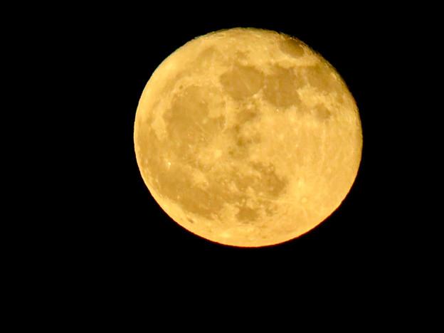 昇ったばかりで煌々と輝く十六夜の月(2018年11月24日) - 2
