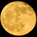 昇ったばかりで煌々と輝く十六夜の月(2018年11月24日) - 3