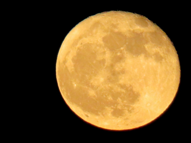 昇ったばかりで煌々と輝く十六夜の月(2018年11月24日) - 6
