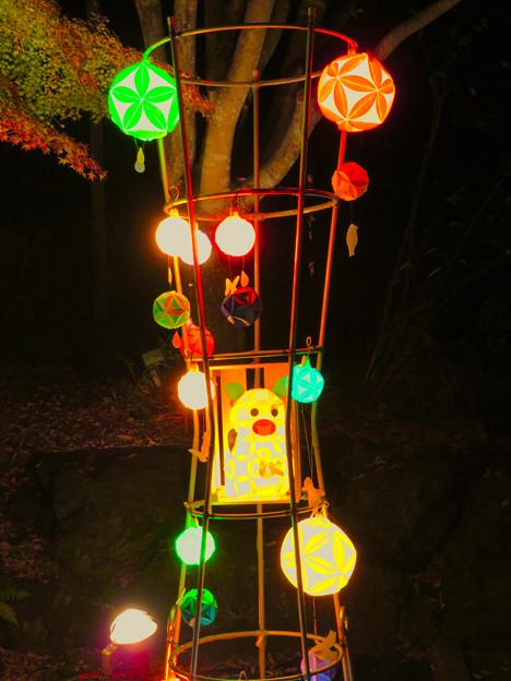 東山動植物園 紅葉ライトアップ 2018 No - 2:ズーボのイルミネーション