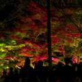 Photos: 東山動植物園 紅葉ライトアップ 2018 No - 5