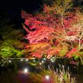 Photos: 東山動植物園 紅葉ライトアップ 2018 No - 6