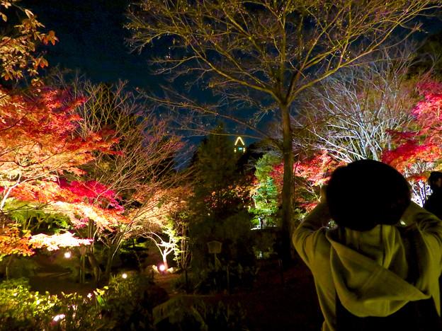 東山動植物園 紅葉ライトアップ 2018 No - 7