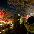 Photos: 東山動植物園 紅葉ライトアップ 2018 No - 7