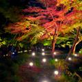 Photos: 東山動植物園 紅葉ライトアップ 2018 No - 8