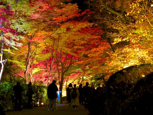 東山動植物園 紅葉ライトアップ 2018 No - 27