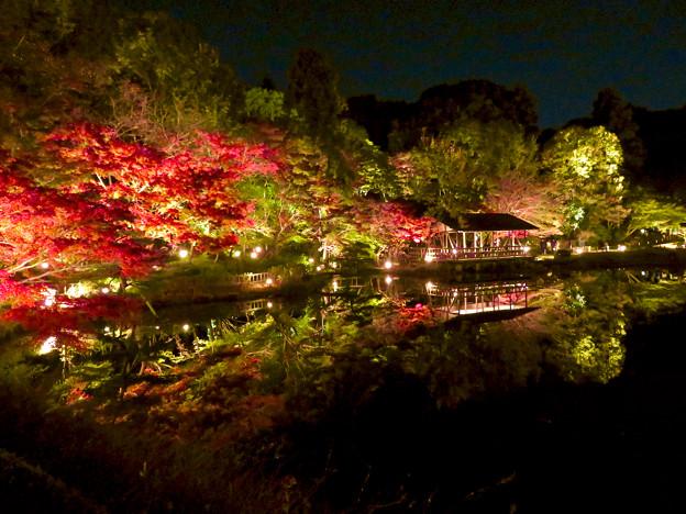 東山動植物園 紅葉ライトアップ 2018 No - 31