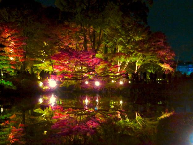 東山動植物園 紅葉ライトアップ 2018 No - 38