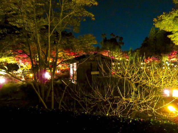 東山動植物園 紅葉ライトアップ 2018 No - 39