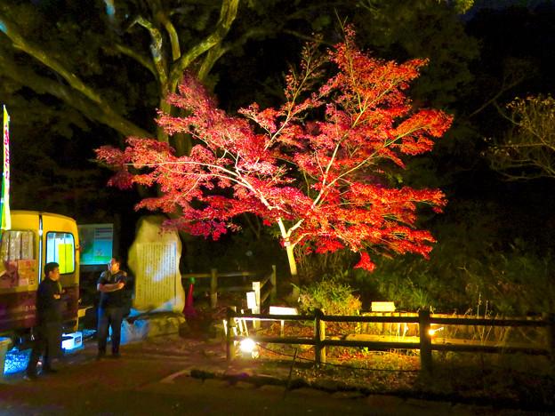 東山動植物園 紅葉ライトアップ 2018 No - 40