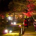 東山動植物園 紅葉ライトアップ 2018 No - 42