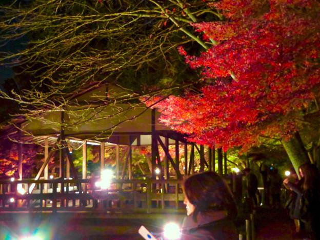 東山動植物園 紅葉ライトアップ 2018 No - 43