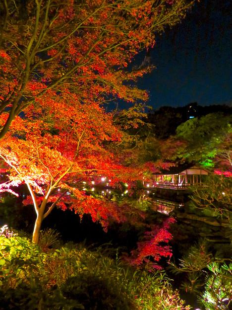 東山動植物園 紅葉ライトアップ 2018 No - 48