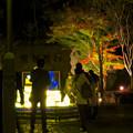 東山動植物園 紅葉ライトアップ 2018 No - 52