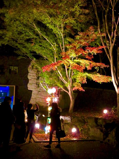 東山動植物園 紅葉ライトアップ 2018 No - 53