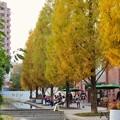 写真: 秋のノリタケの森 - 4