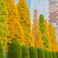写真: 秋のノリタケの森 - 7