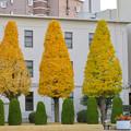 写真: 秋のノリタケの森 - 8