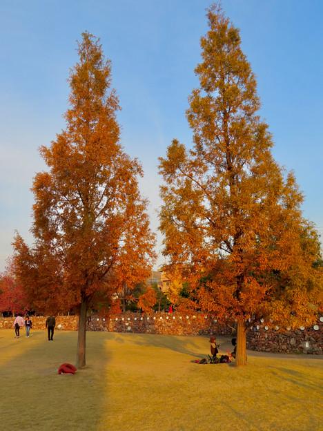 写真: 秋のノリタケの森 - 25