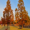 秋のノリタケの森 - 25