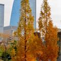 写真: 秋のノリタケの森 - 28