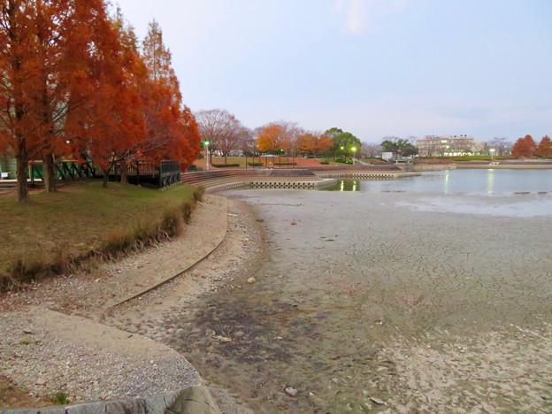 水抜きした状態の秋の落合公園 - 13