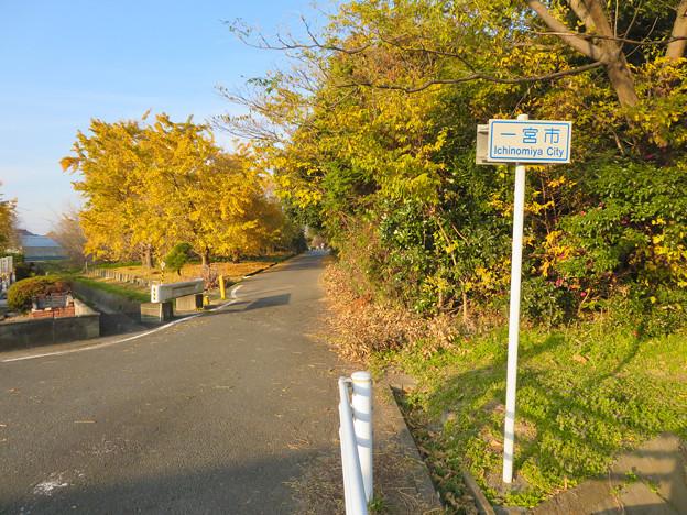 そぶえイチョウ黄葉まつり 2018 No - 37:稲沢市と一宮市の境界線