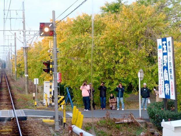 そぶえイチョウ黄葉まつり 2018 No - 87:名鉄尾西線と黄葉を撮影してた人たち