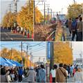 Photos: そぶえイチョウ黄葉まつり 2018 No - 94