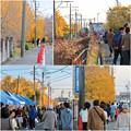 Photos: そぶえイチョウ黄葉まつり 2018 No - 95
