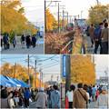 Photos: そぶえイチョウ黄葉まつり 2018 No - 96