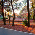不老公園 - 3