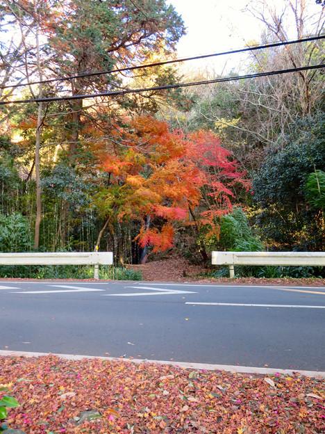 不老滝前の紅葉した木々 - 1