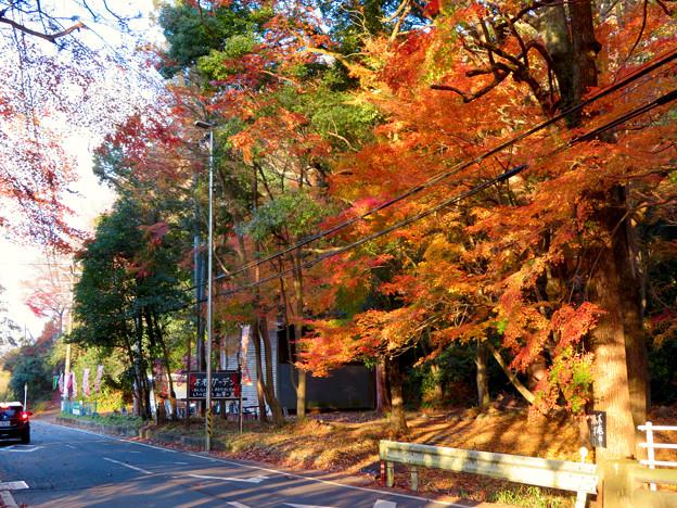 不老滝前の紅葉した木々 - 3
