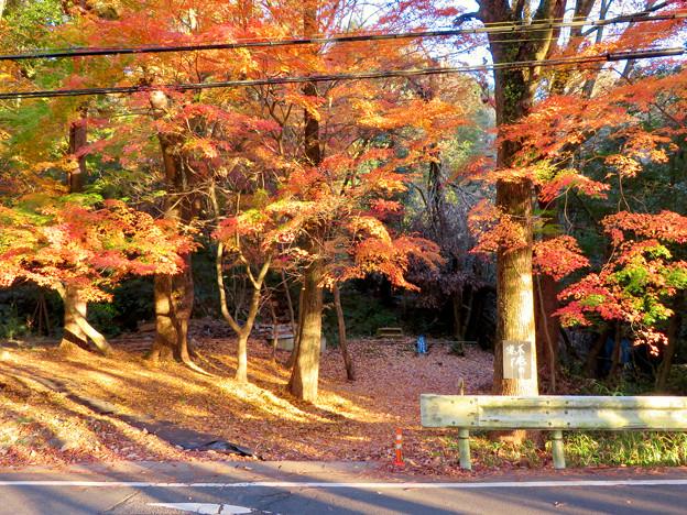 不老滝前の紅葉した木々 - 4