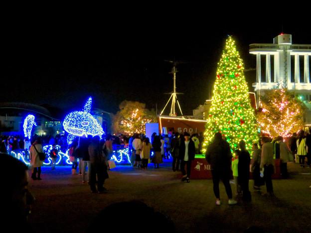名古屋港ガーデンふ頭:JETTY前のクリスマスイルミネーション 2018